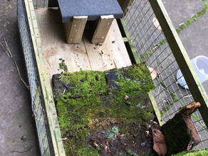 Harvest Mouse Platform, Otter in the holt & mysterious morning mammals…..