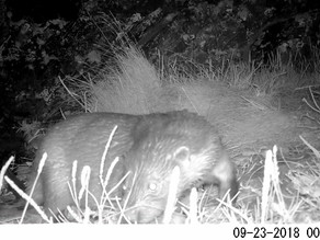 More Great Otter Footage from Hillockhead