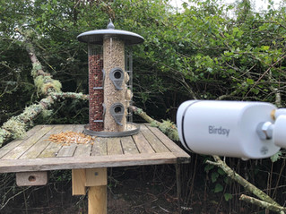 Hillockhead Bird Feeders… what a Birdsy treat!