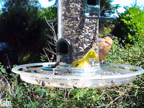 Filming my Garden Feeders