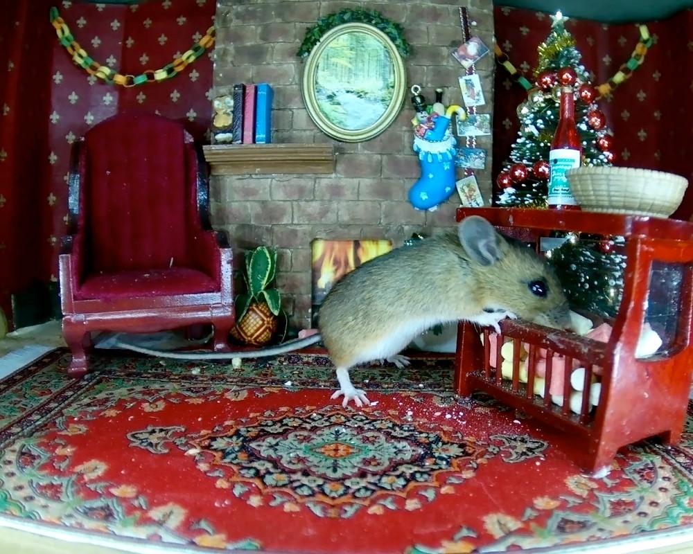 xmas-mouse-stashing-suet_00007