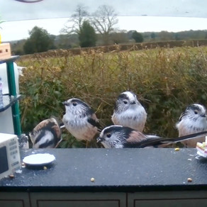 Lots of Bird Feeding Action on my Live Cams