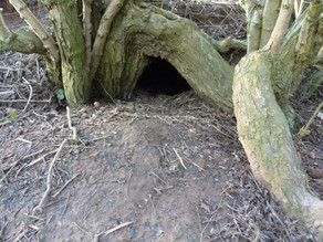 Could these be possible Fox dens?