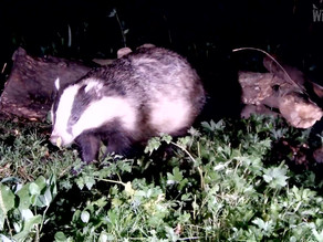 Badger Bonanza!