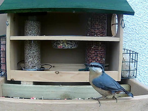 The First Day on the New Feeders….