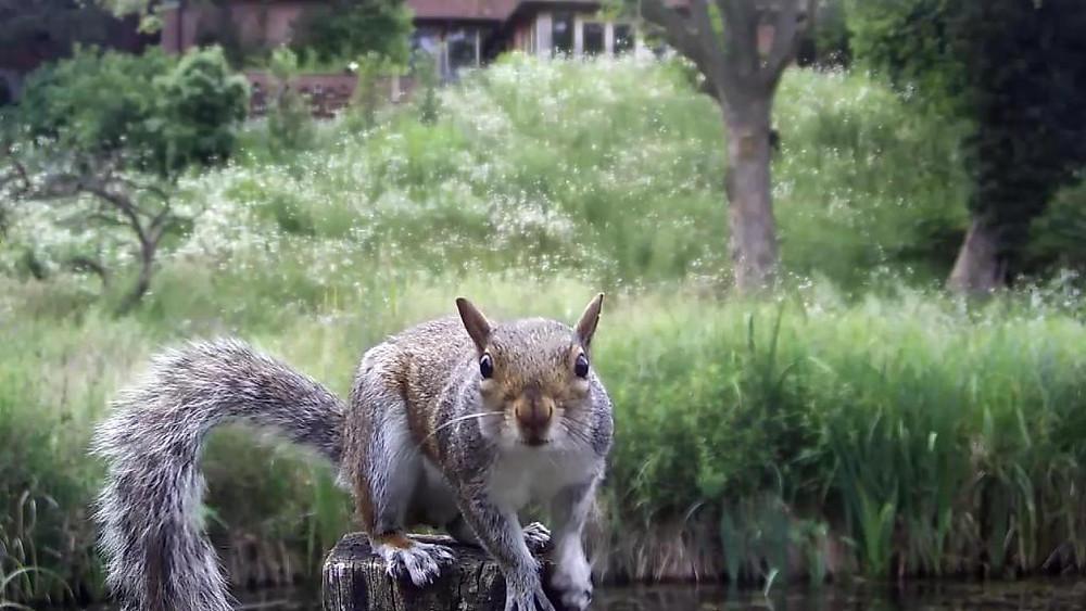 Kingfisher VIVOTEK 192.168.1.132 2016-06-22 18-45-47.152