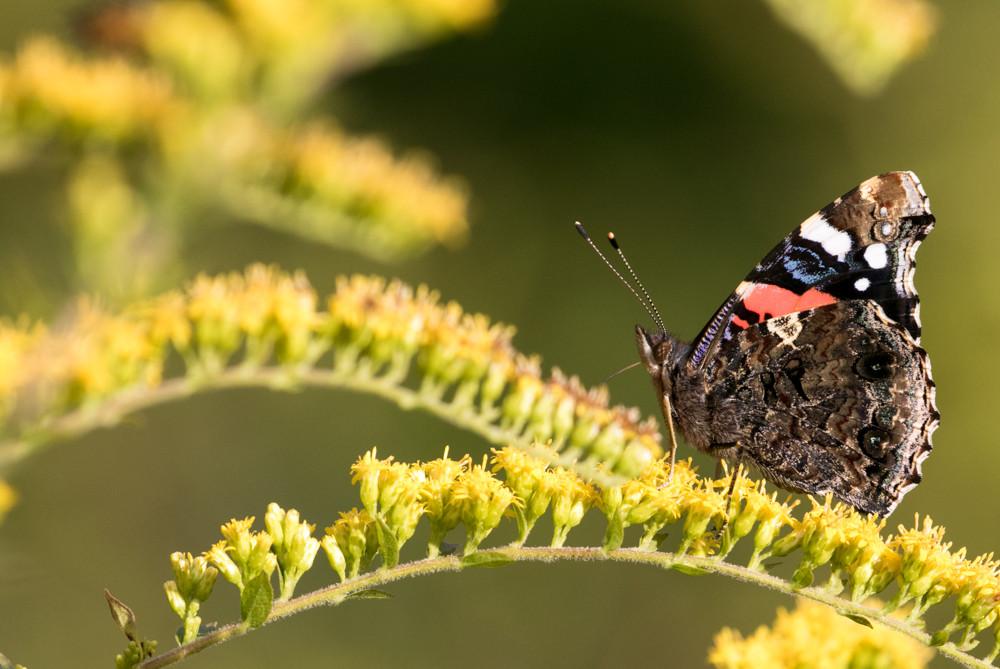 yv_butterflies-7850