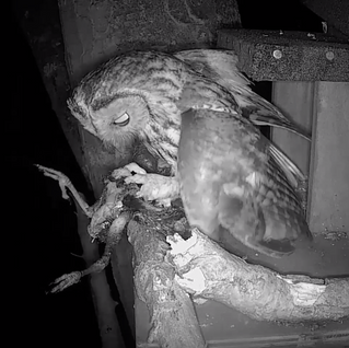 There's Still Tawny Activity at Yew View