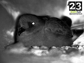 #30DaysWild – Day 23  Ultimate Shetland: Flower Meadows & Mousa Petrels