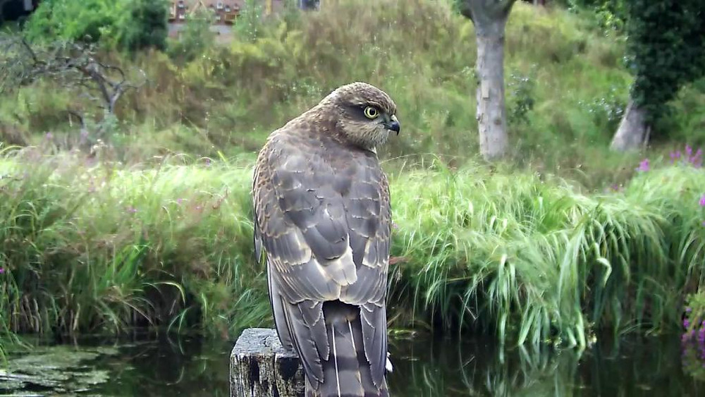 Kingfisher VIVOTEK 192.168.1.132 2015-09-02 18-41-54.028