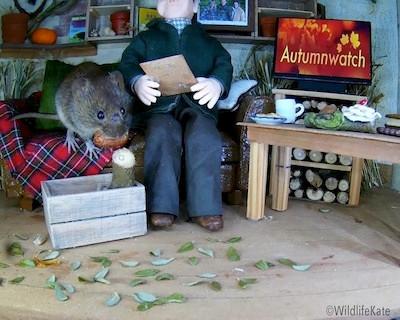 Autumnwatch vole2
