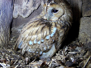 We have a Tawny Egg!