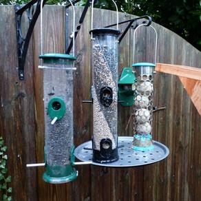 New Bird Bar Set-up