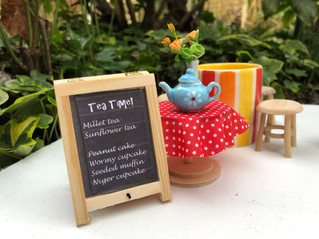 WildlifeKate NestEnders Updates and a Tearoom for the Birds!