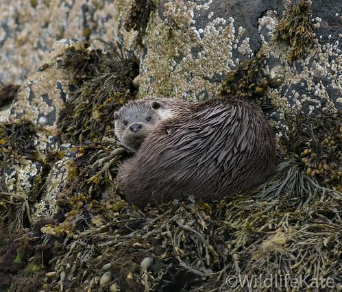 Shetland_-8924