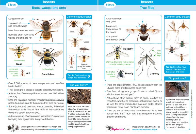 Invertebrate ID Guide 3