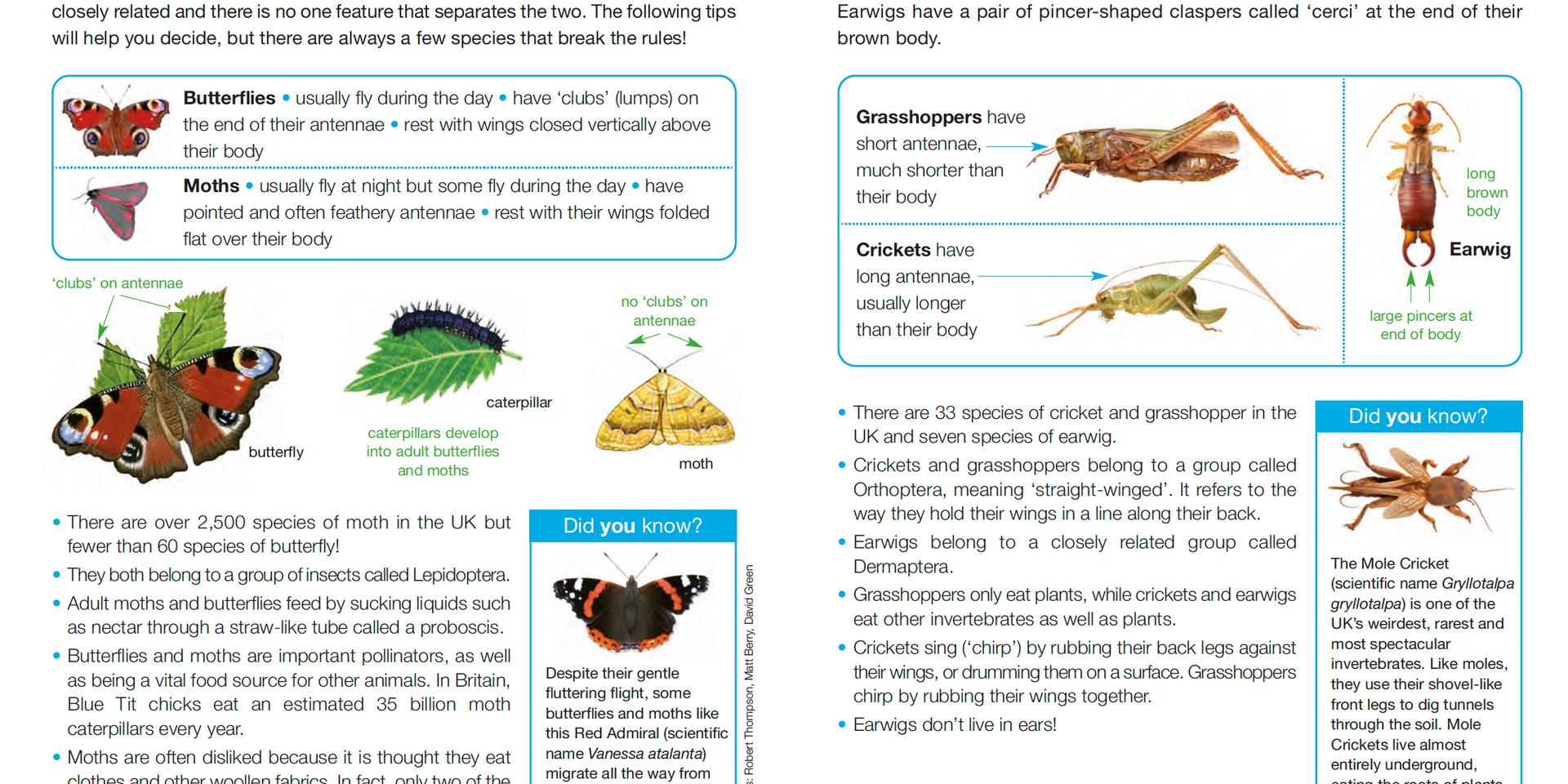 Invertebrate ID Guide 4