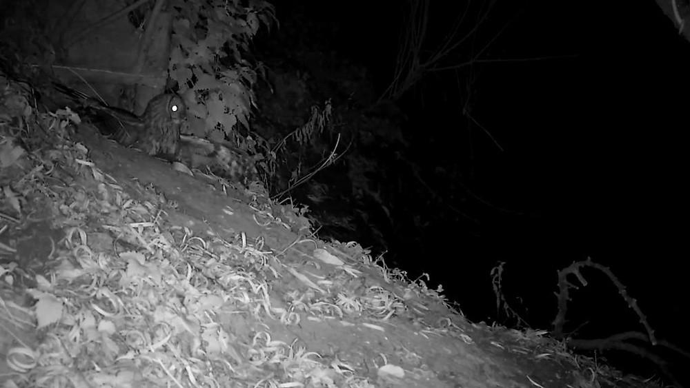 vivotek-otter-cam-2016-11-07-19-25-50-559