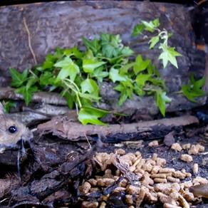 Build a Wood Mouse Stash!