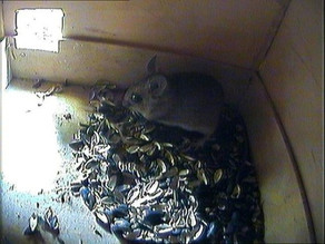 Mouse cam morning