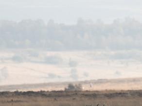 Derbyshire Moorland Red Deer Rut
