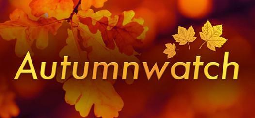 Autumnwatch-logo-1100x511.jpg