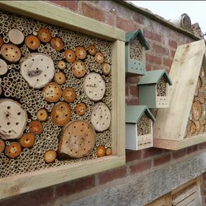 Creating a Bee Bonanza !