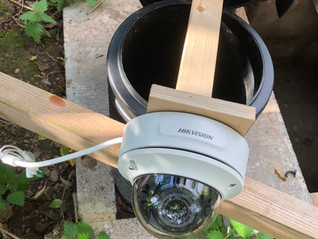The First Yew View Otter Holt Camera goes in as the Badgers move in again….