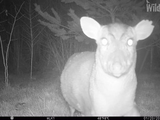 Find some track... set a trail camera!