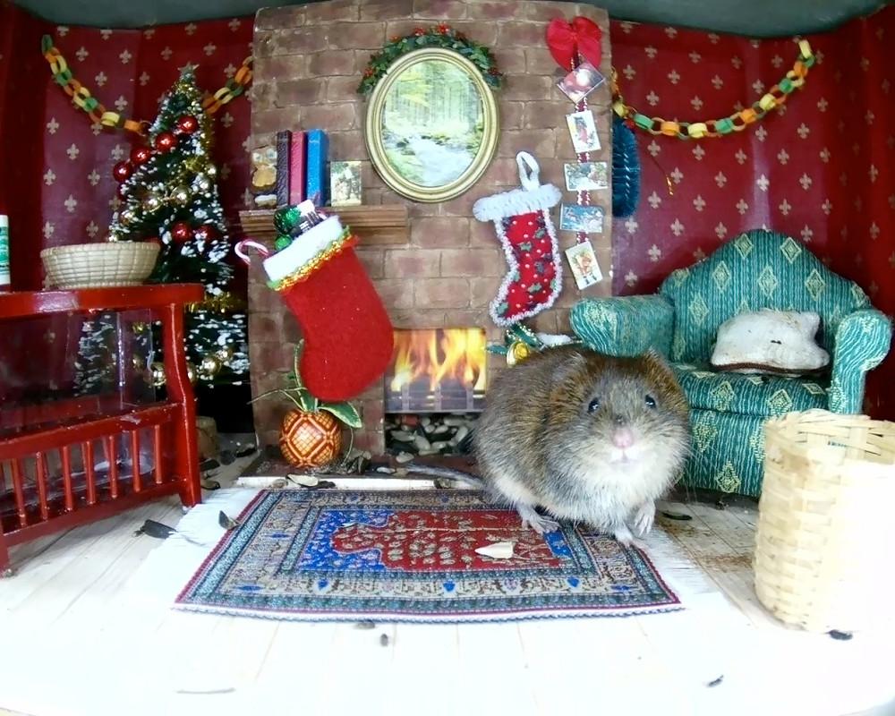 Christmas Mammal Box 2015_4_00001