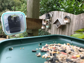 Setting up a 'My Naturewatch' Raspberry Pi Camera