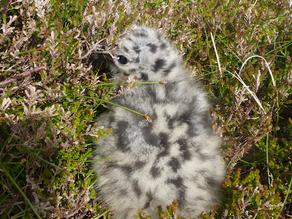 Shetland 2015 – Day 2