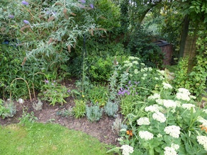 A garden for insects…..