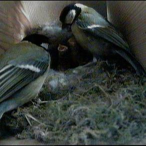 Happier nest box news