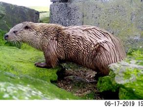 The Bushnell Otter Challenge!