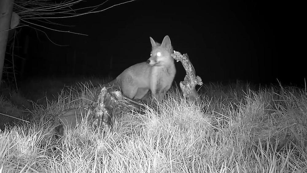 vivotek-fox-cam-2016-12-26-20-02-26-664
