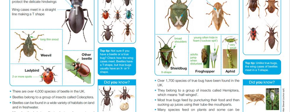 Invertebrate ID Guide 2