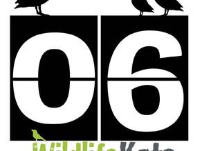 #30DaysWild – Day 6  One perch….. how many species?