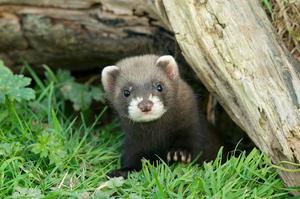 Image from British Wildlife Centre  By Matt Brinstead