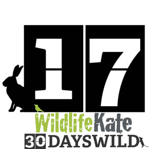 #30DaysWild – Day 17  Finding an Otter