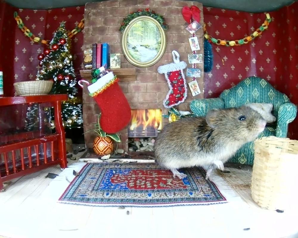 Christmas Mammal Box 2015_3_00001