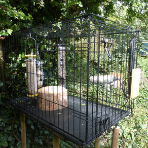 Dog Crate Feeding Station Success