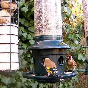 Lots of hungry Visitors in the WildlifeKate Patch