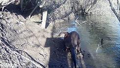 Daylight otter 7th Feb 14_00000.jpg