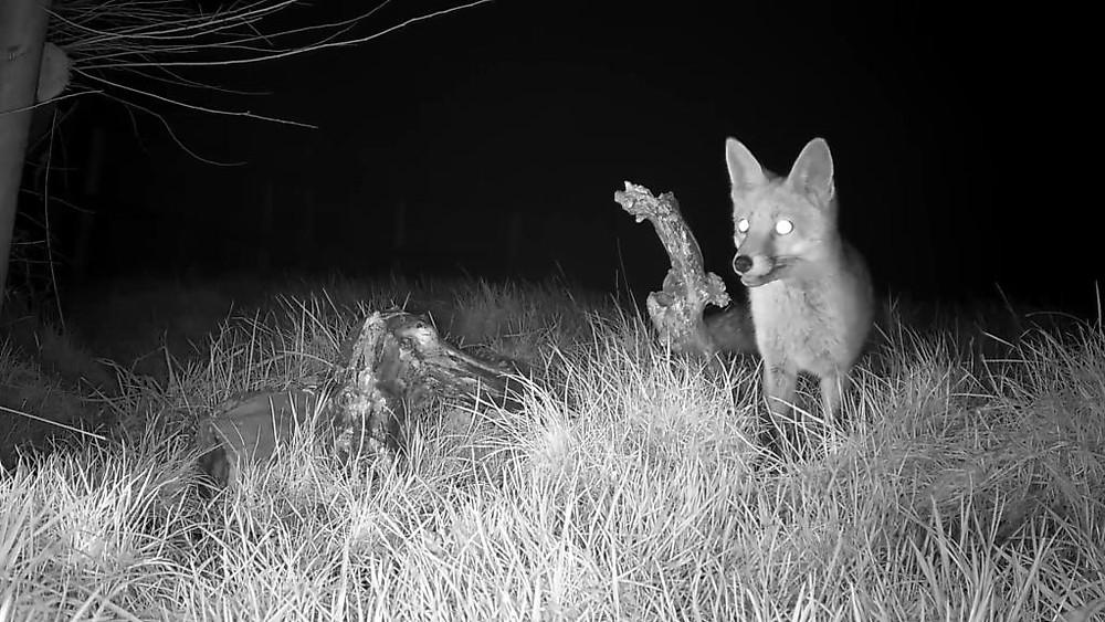 vivotek-fox-cam-2016-12-26-20-02-42-532