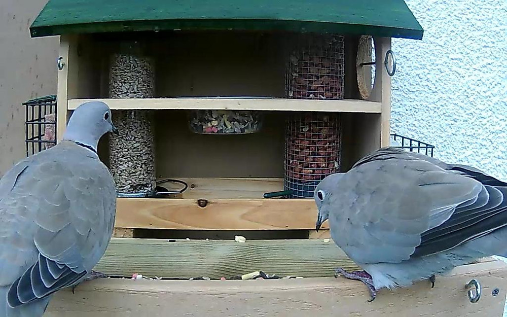 cam14-patio-feeders-2016-09-26-15-22-09-471