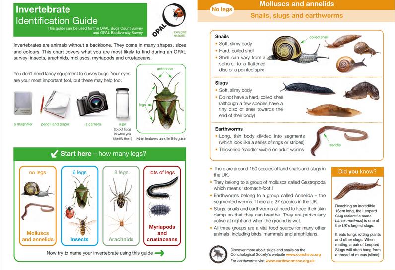 Invertebrate ID Guide 1