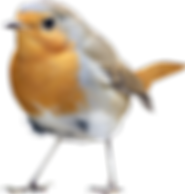 birds_PNG50.png