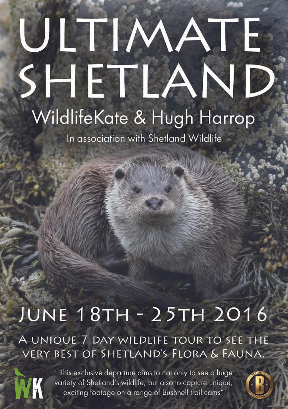 Ultimate Shetland flyer2
