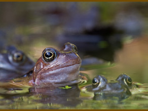 More frogs …… and spawn!